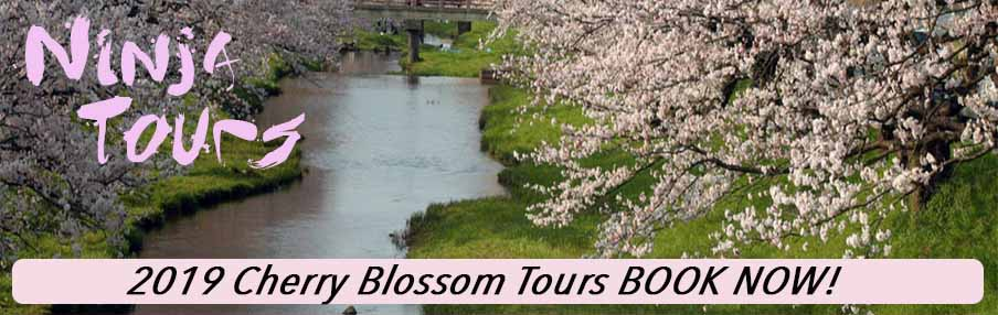 2019 Cherry Blossoms in Japan Special Motorcycle Tours NinjaTours