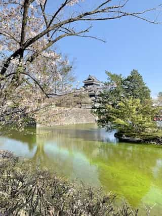 japan motorcycle tour ninjatours matsumoto fuji  castle with cherry blossoms