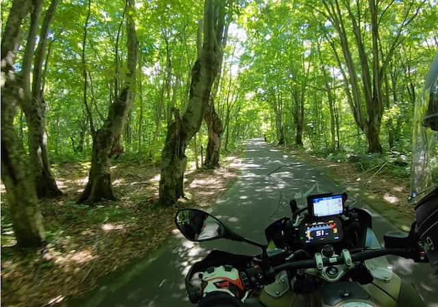 Ninjatours Japan motorcycle tour Hachimantai forest ride shady road
