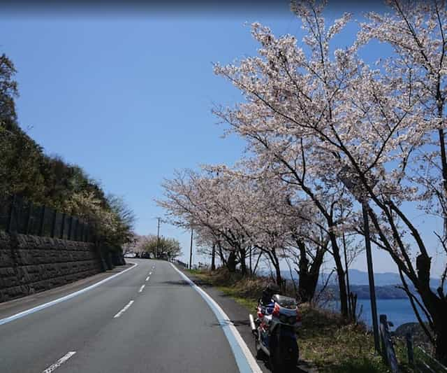 Japan motorcycle tour ninjatours dogo onsen ashizukuri cherry blossoms