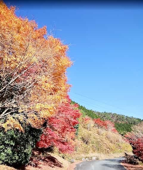 Japan motorcycle tour ninjatours kagawa dogo onsen autumn leaves