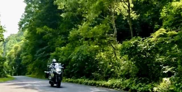 japan motorcycle tour ninjatours aizu uonuma onsen tree lined road